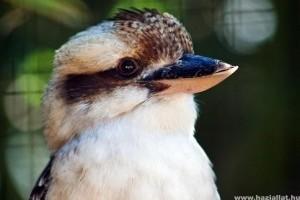 Kólával mentették meg a ritka madár életét