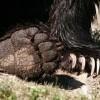 Védett állatokkal és medvemancsokkal kereskedtek