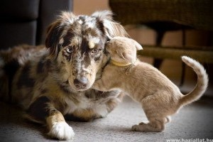 Kutya-macska box. Ki lesz a győztes?