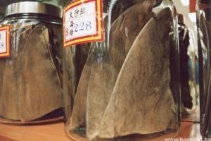 Megtiltják a cápauszony felszolgálását Kínában