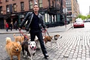 Százszoros bírságolás a kutyapiszok miatt