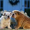 Szerelemhotel nyílt kutyáknak