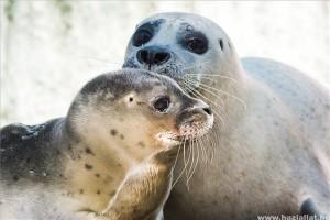 Fóka bébi született a Nyíregyházi állatparkban