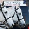 Állatvédők és lovaskocsi-hajtók harca Rómában