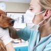 Kutya szemtisztítás