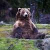 A norvég medvék tudják, hogy kell bulizni