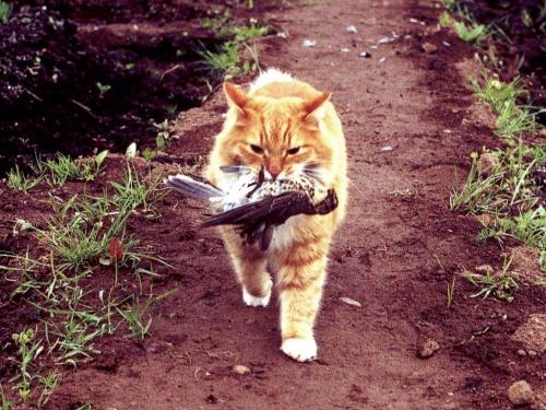 macska_vadaszik