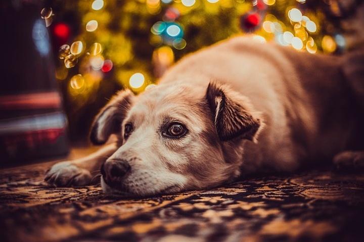 kutya_biztonsagos_karacsony