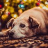 A kutya karácsonyfáját!