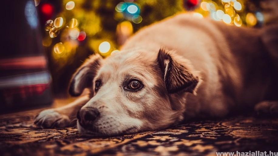 A kutya karácsonyfáját! Előzzük meg a bajt!