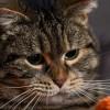 Miért imád legyet fogni a macska?