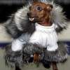 Milyen a 2009-es téli kutyamódi? Gyere videózni, ha trendi gazdi akarsz lenni!