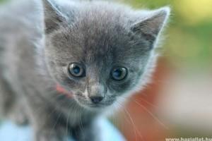 Milyenek a magyar macskások?