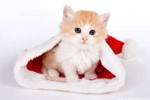 Hogyan csomagolj be egy cicát?
