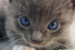 Macskakultusz