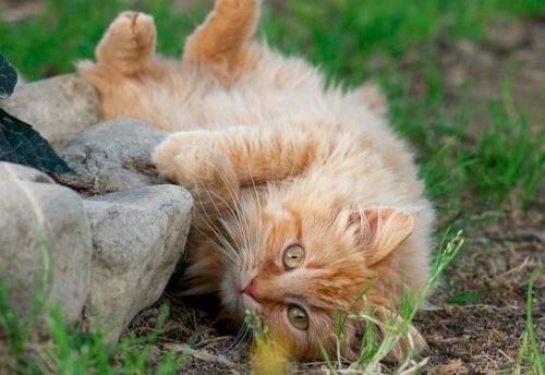 macska_onkifejezes