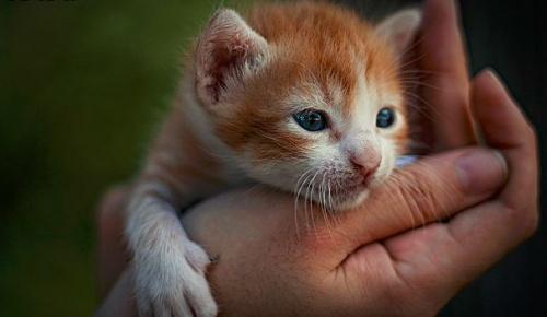 macska kiscica