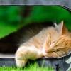 Macskatartáshoz szükséges macskafelszerelések