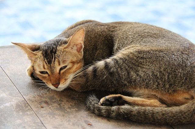 cat-597990_640