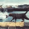 Macskatartás: vakáció, utazás