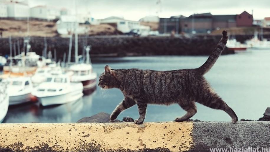 Nyaralás a macskával vagy nélküle?