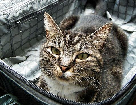 macska_utazik