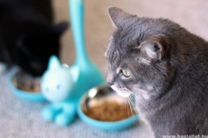 Macska etetése: kiscica, felnőtt, vemhes és idős