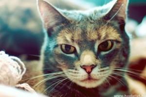 Macskabetegségek: tünetek és kezelésük