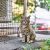 Macska élősködői