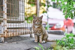 Bolhák, tetvek, kullancsok: mit tegyünk a macska élősködői ellen?