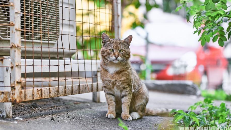 macska külső élősködői tabletták bőr parazitákhoz