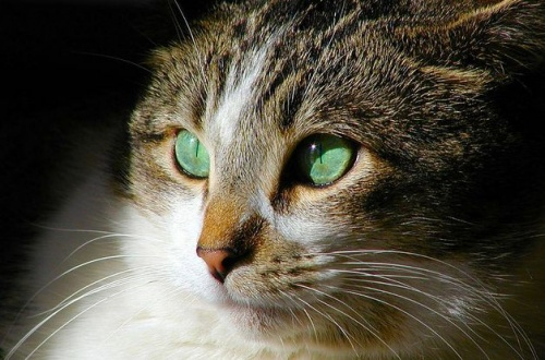 macska_baleset