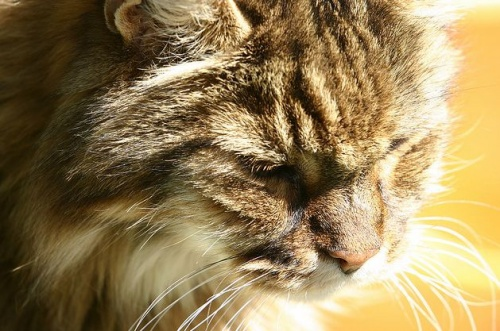macskagyogyszerek