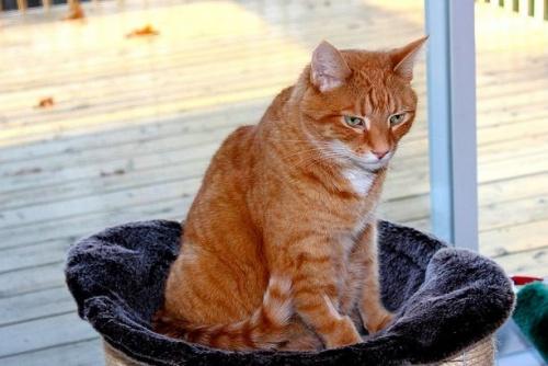 Ha veszettségre utaló tüneteket észlelünk, akkor ne akarjuk megfogni a macskát