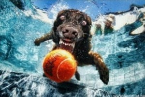 Hihetetlen fotósorozat labdaőrült kutyákkal