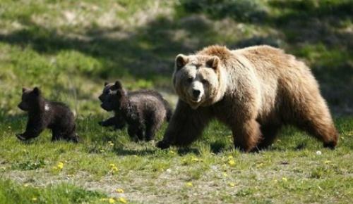 romania-medve-vadaszat