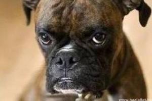Ilyen lehet az élet egy kutyairodában - képekben :)