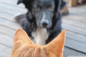 Állatok Világnapja: hamarosan súlyos árat fizet,  aki kutyául bánik ebével