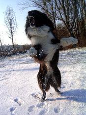 ugró-kutya