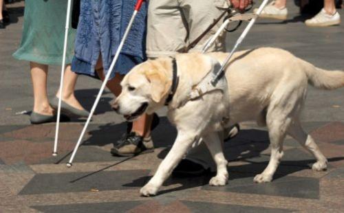 vakvezető kutya