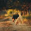 Kutyatulajdonosok figyelem: itt az őszi kullancsveszély!