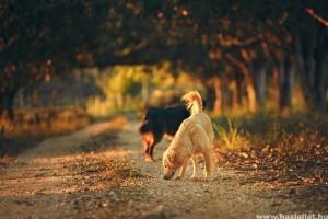 Ezekre feltétlen figyelj ősszel, ha kutyád van!
