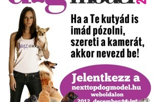 Jó hír a kutyusok barátainak