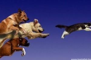 A kutya kergeti a macskát...