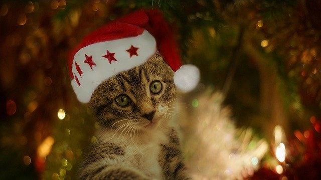 cat-4643133_640