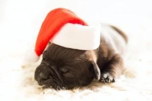 Ne ajándékozz állatot karácsonyra!