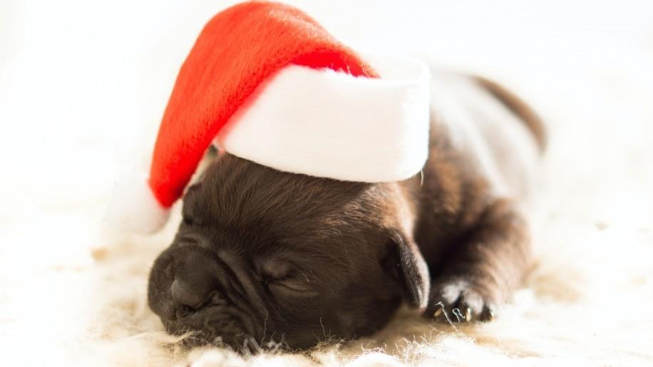 Ezért felelőtlenség állatot ajándékozni karácsonyra!
