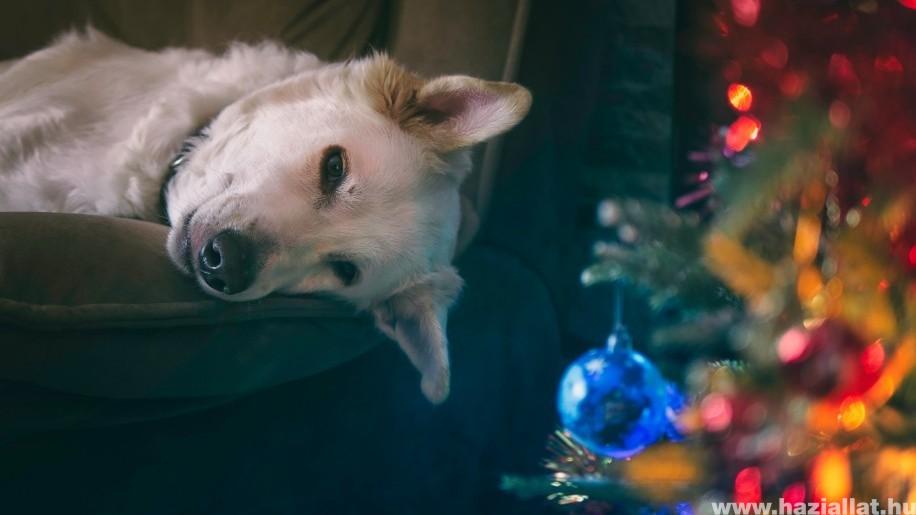 Ennyire cukik a kedvenceink karácsonykor - fotók