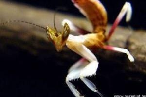 Hihetetlen az ízeltlábúak fajgazdagsága a trópusi esőerdőkben