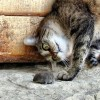 Egerészik a jól táplált macska?